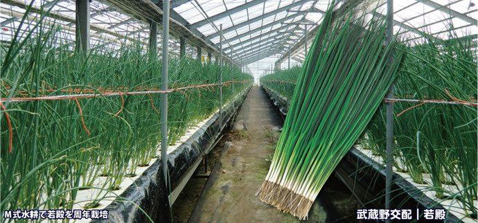 栽培 耕 ネギ 水